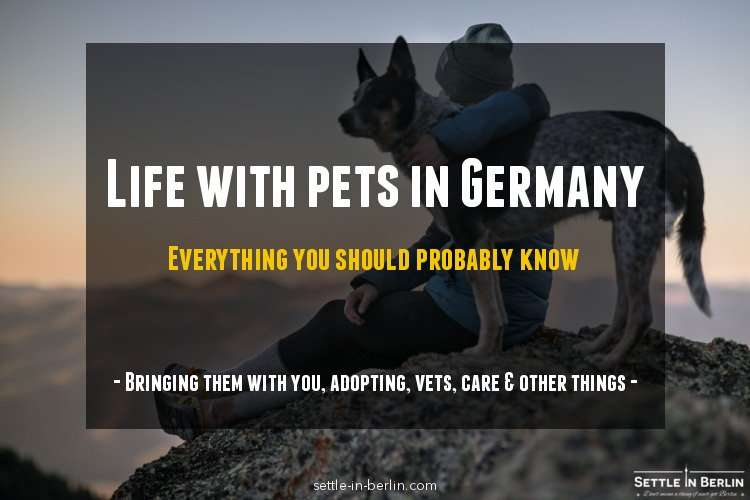 Life with pets in Germany